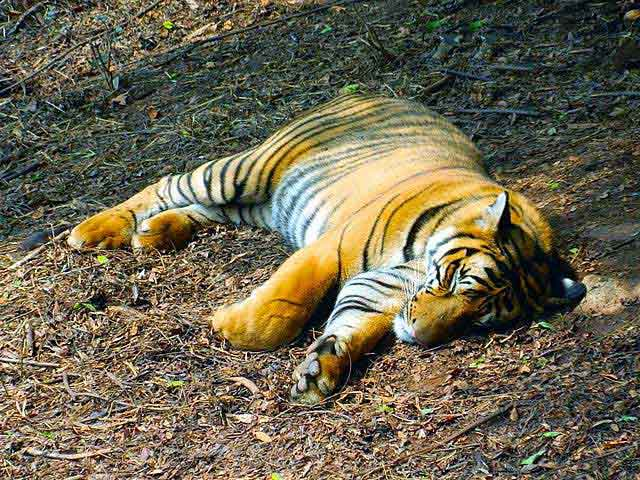 assam-state-zoo-and-botanical-garden