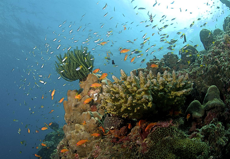 Top 5 Scuba Diving Spots in Andaman