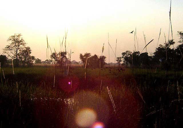 dudhwa-national-park