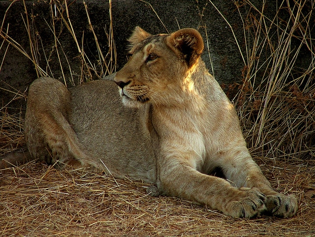 gir-forest-national-ark