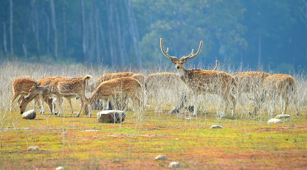 Jim Corbett National Park, Nainital