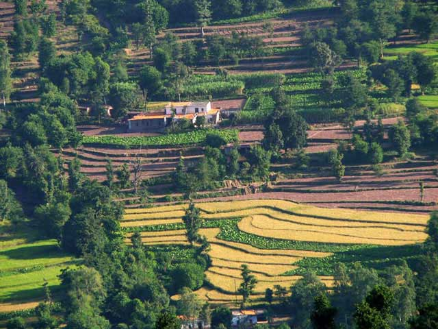 Kasauli India  city pictures gallery : ... Tour Guide To Visit Kasauli Hill Station | Trans India Travels