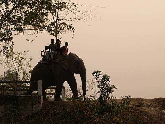 kaziranga-national-park1