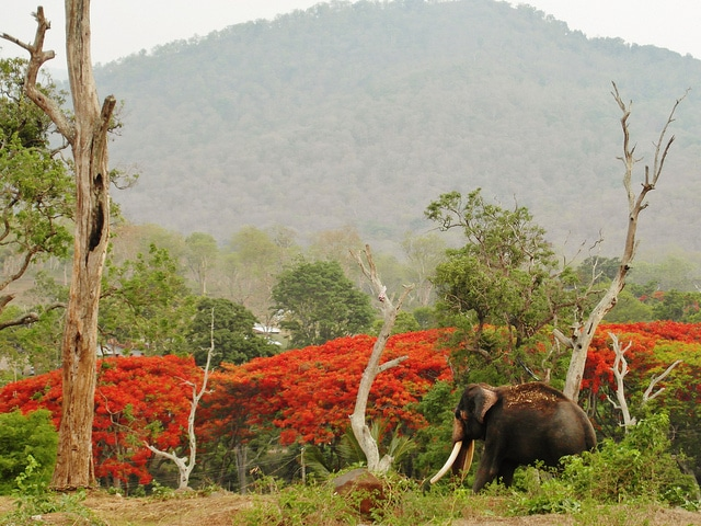 mudumalai-national-park3