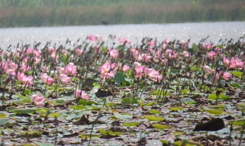 Ousteri Wetland and National Park