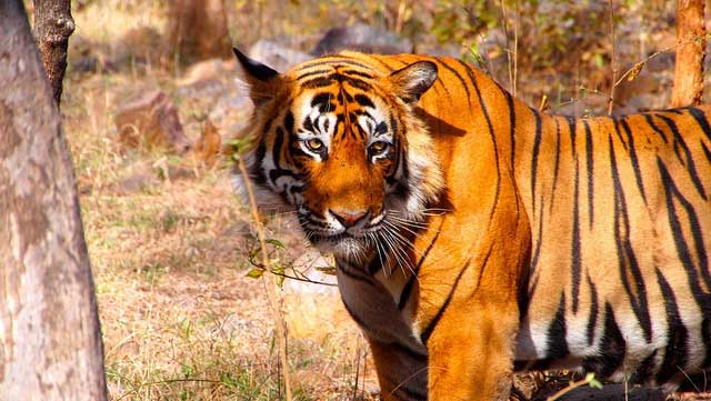 ranthambore-national-park3