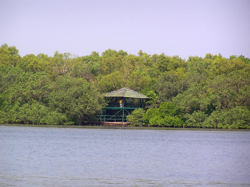Salim Ali Lake And Bird Sanctuary