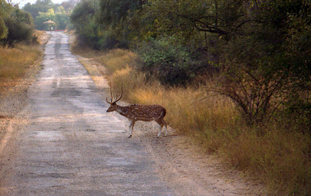 sariska-national-park