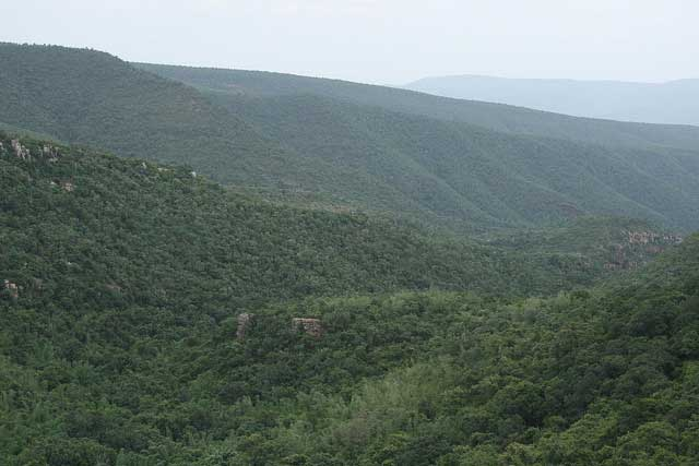 sri-venkateswara-wildlife-sanctuary