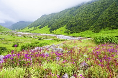 Valley Of Flowers Nainital