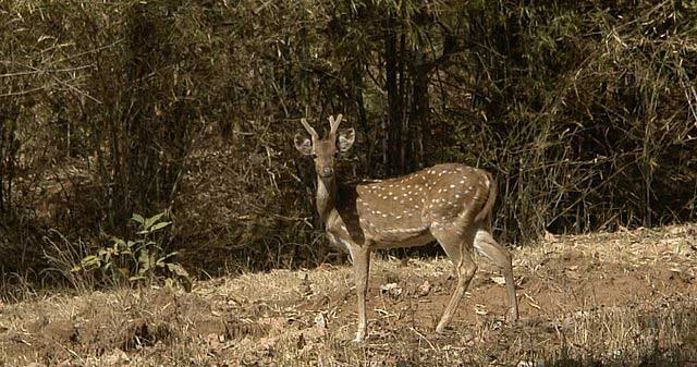 bhandavgarh-national-park
