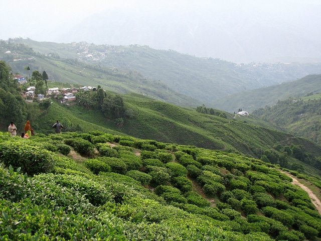Trek to Darjeeling