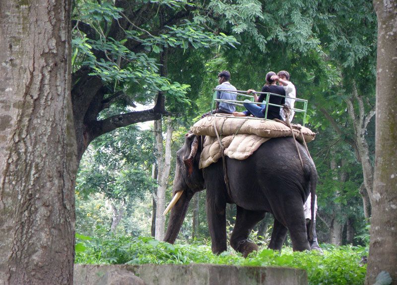 Dubare Elephant Camp Coorg