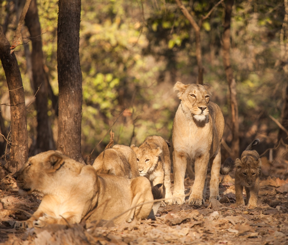 Gir National Park, Junagarh