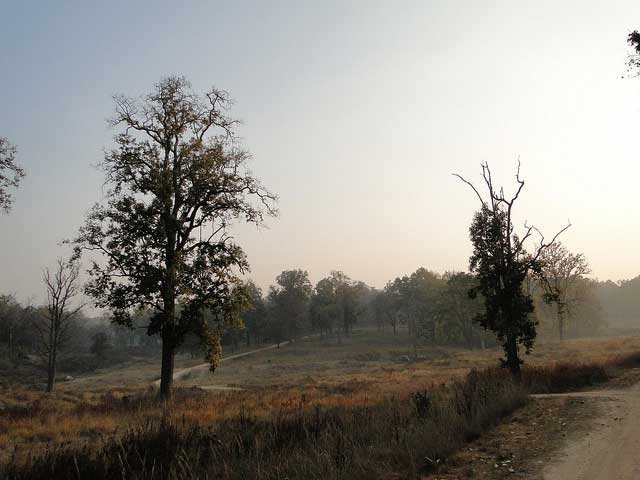kanha-national-park1