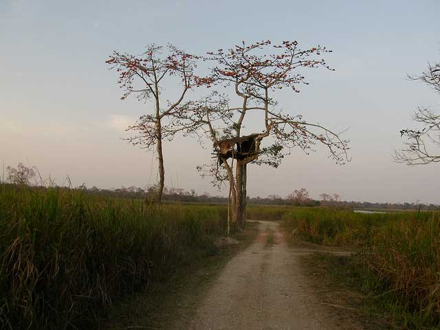 kaziranga-national-park8