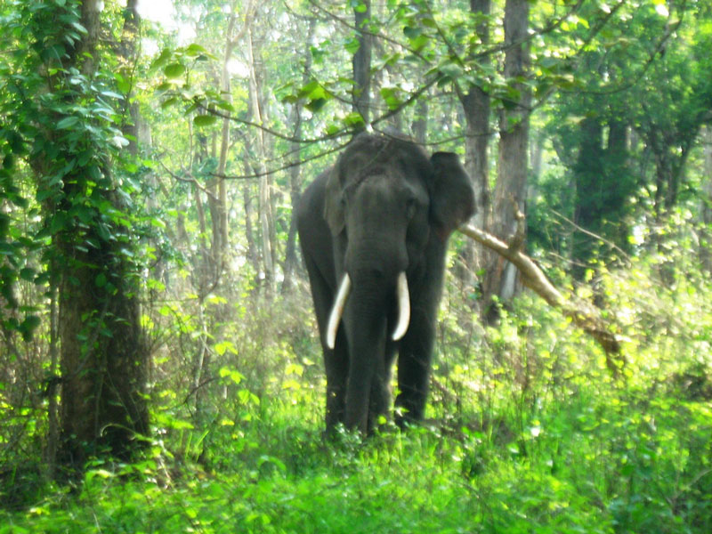 Mudumalai National Park Ooty