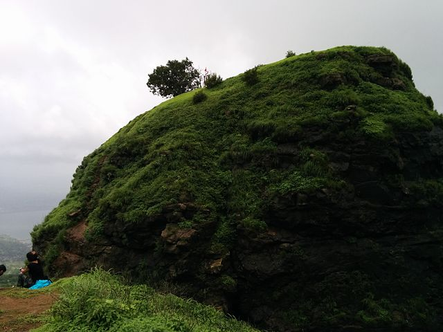 one-tree-hill-point