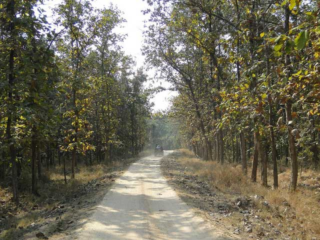 pench-national-park3