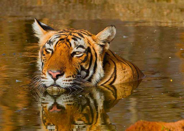 sariska-national-park2