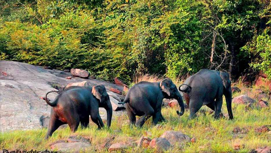 Shendurney Wildlife Sanctuary-kollam