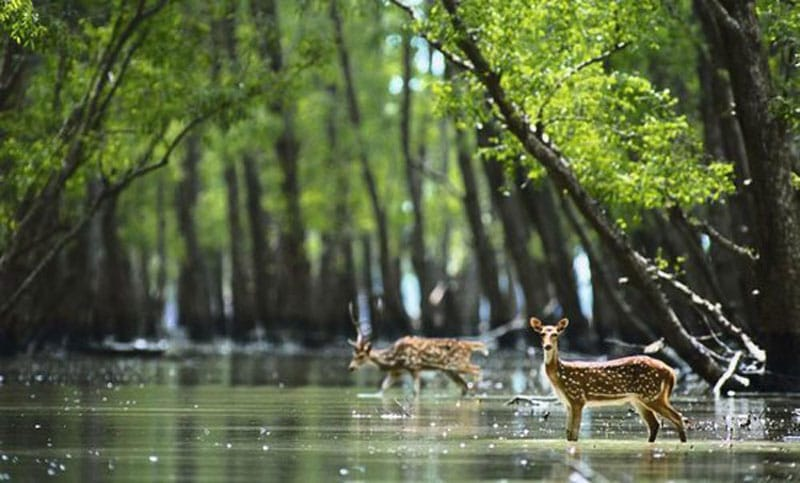 Top 5 Places to Visit in Sundarbans