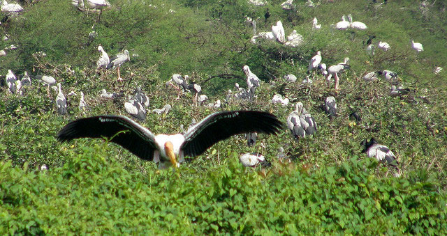 Image result for Vedanthangal Bird Sanctuary images
